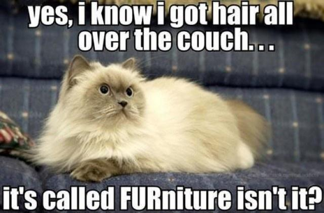 Funny hair quotes funny hair sayings funny hair for Furniture quotes