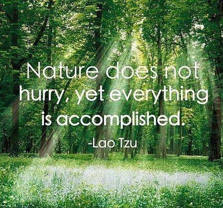 Nature does not hurry, yet everything is accomplished Picture Quote #2