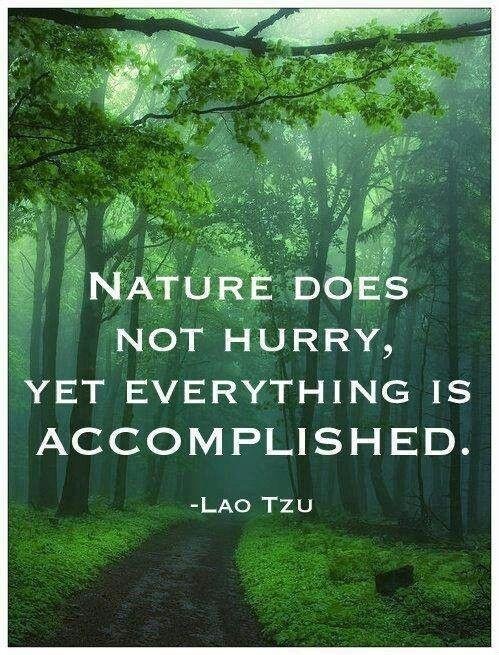 Nature does not hurry, yet everything is accomplished Picture Quote #3