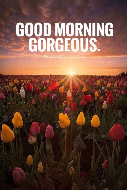 Good morning gorgeous Picture Quote #1