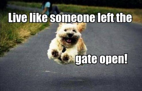 Live like someone left the gate open Picture Quote #2