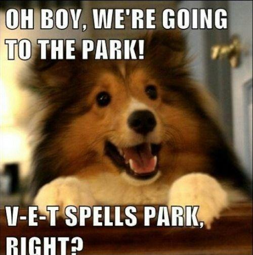 Oh boy! were going to the park! V-E-T spells park right? Picture Quote #1