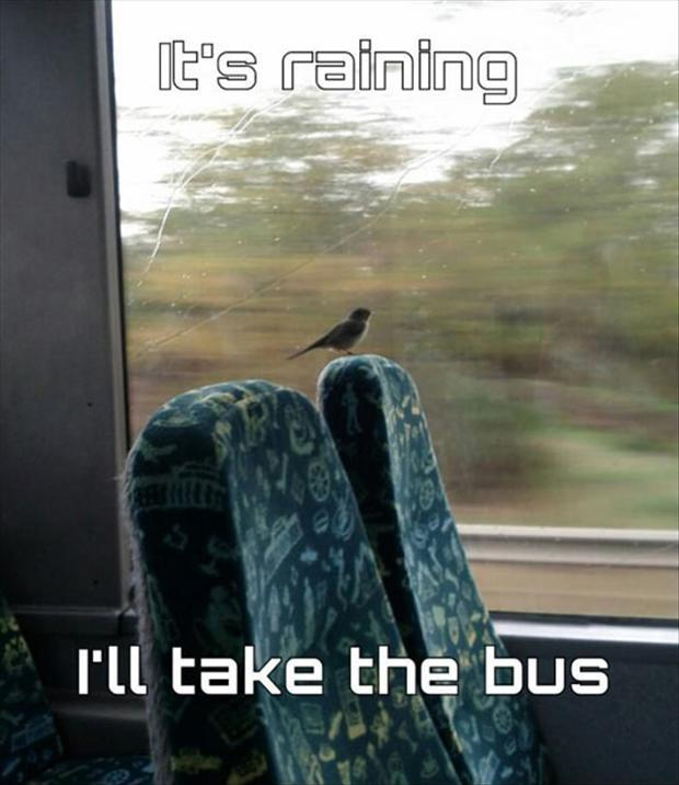 It's raining, I'll take the bus Picture Quote #1