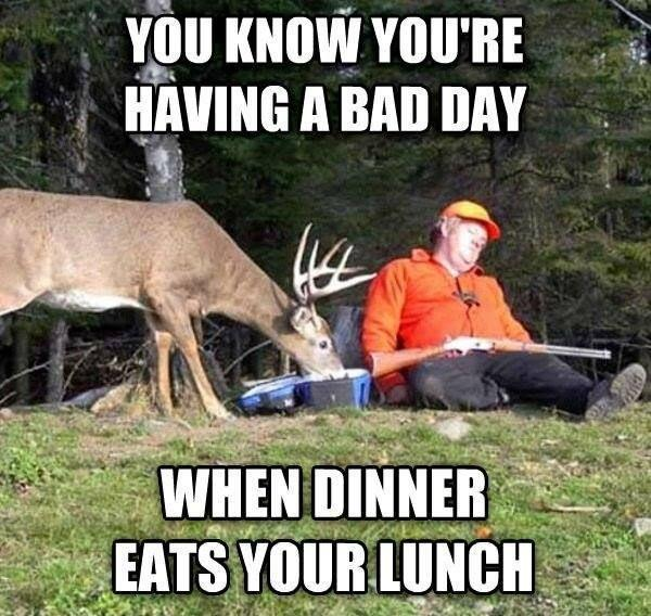 Bad Day Quotes And Sayings: You Know You're Having A Bad Day When Dinner Eats Your