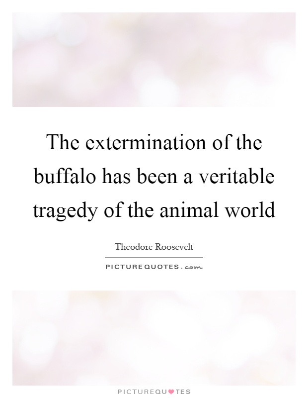 The extermination of the buffalo has been a veritable tragedy of the animal world Picture Quote #1