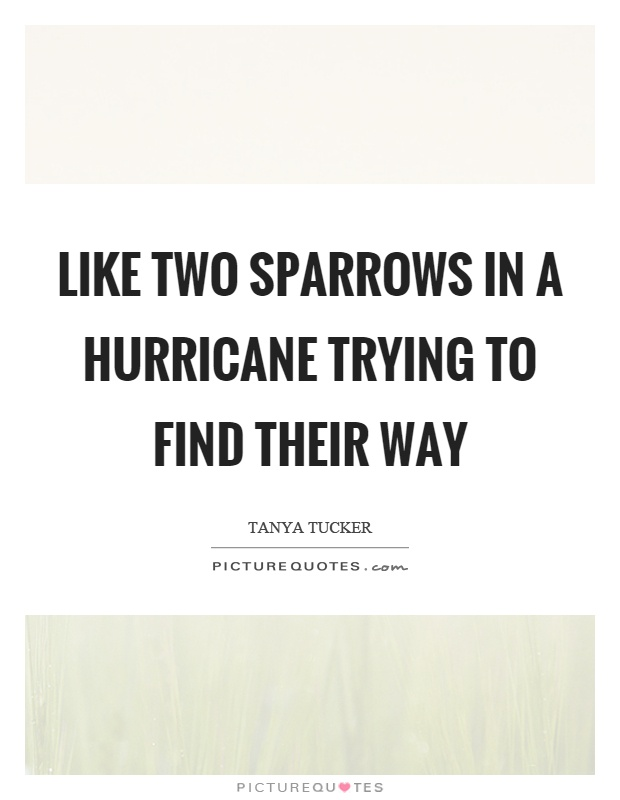 Like two sparrows in a hurricane trying to find their way Picture Quote #1