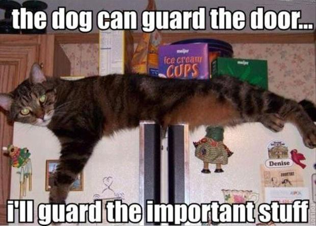 The dog can guard the door... I'll guard the important stuff Picture Quote #1