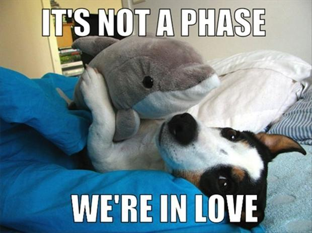 It's not a phase, we're in love Picture Quote #1