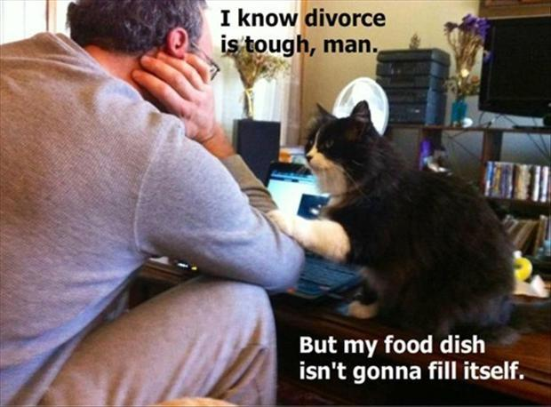 I know divorce is tough man, but my food dish isn't gonna fill itself Picture Quote #1