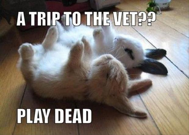 A trip to the vet?? Play dead Picture Quote #1