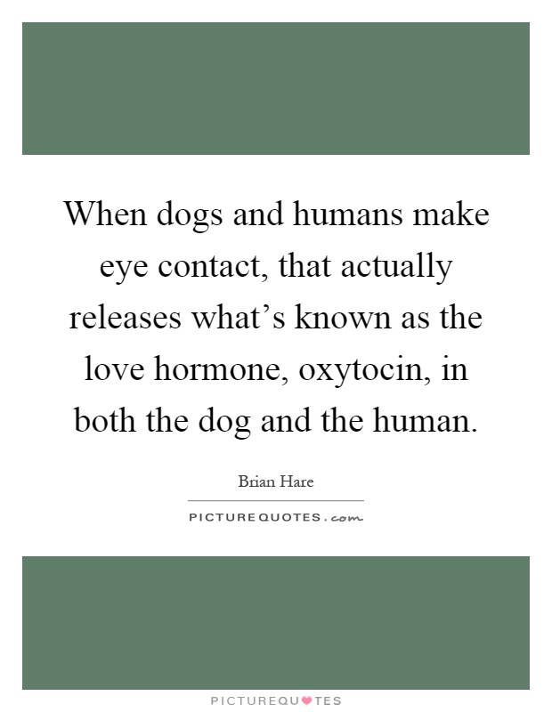 When dogs and humans make eye contact, that actually releases what's known as the love hormone, oxytocin, in both the dog and the human Picture Quote #1