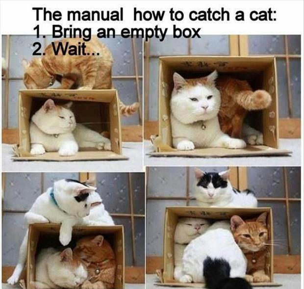 The manual: How to catch a cat: 1. Bring an empty box. 2. Wait Picture Quote #1