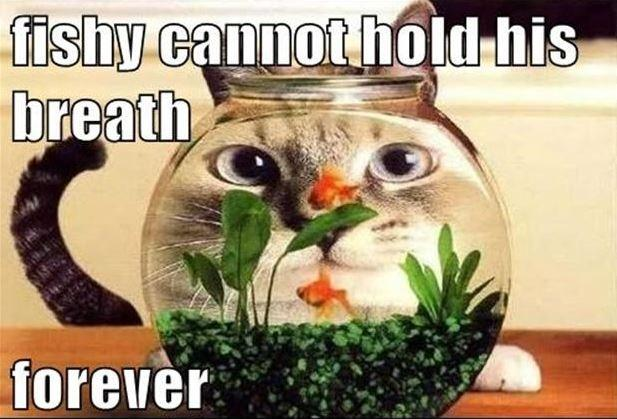 Fishy cannot hold his breath forever Picture Quote #1