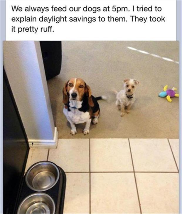 We always feed our dogs at 5pm. I tried to explain daylight saving to them. They took it pretty ruff Picture Quote #1