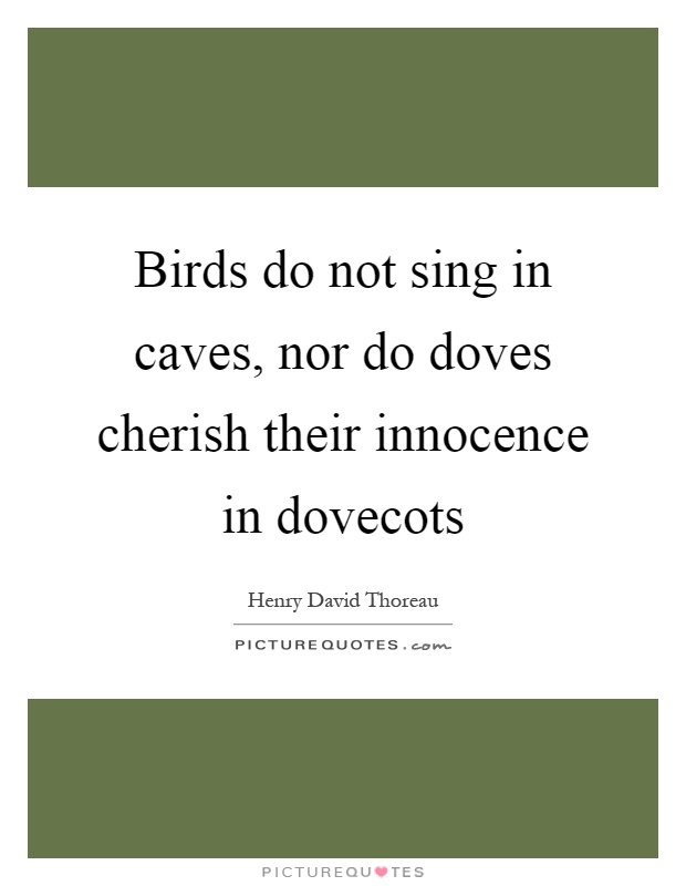 Birds do not sing in caves, nor do doves cherish their innocence in dovecots Picture Quote #1