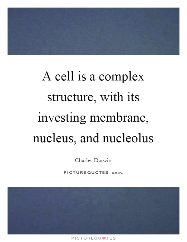 nucleus and nucleolus relationship tips