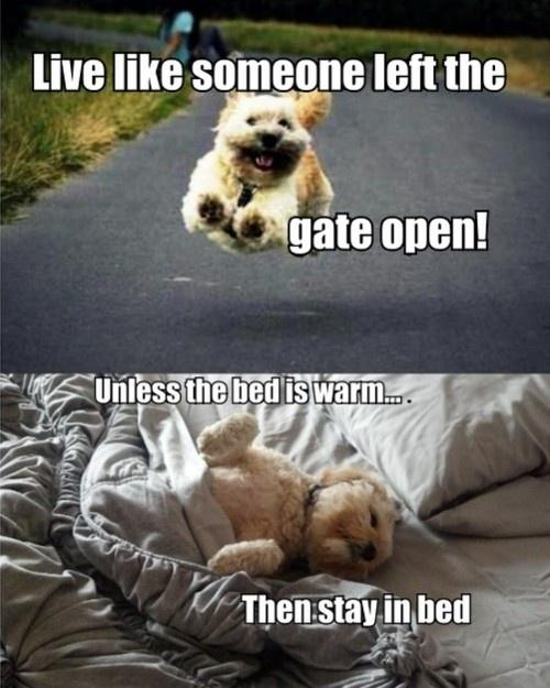 Live like someone left the gate open! Unless the bed is warm.. then stay in bed Picture Quote #1
