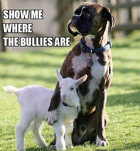 Show me where the bullies are Picture Quote #1