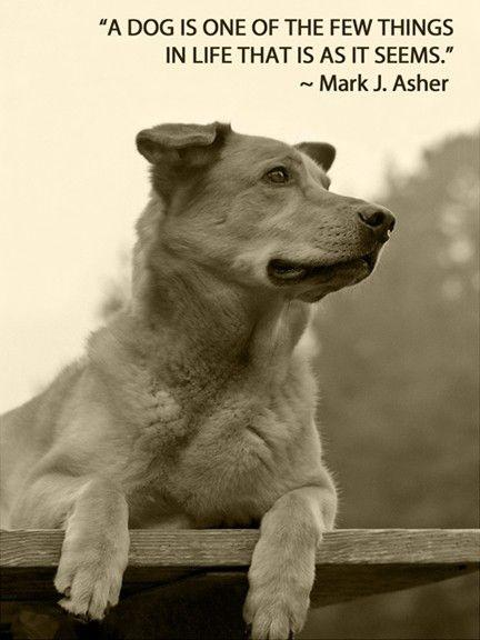 A dog is one of the few things in life that is as it seems Picture Quote #1