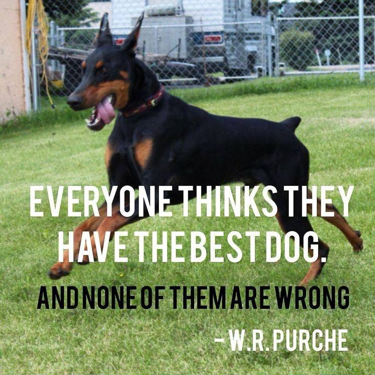 Everybody thinks they have the best dog Picture Quote #1