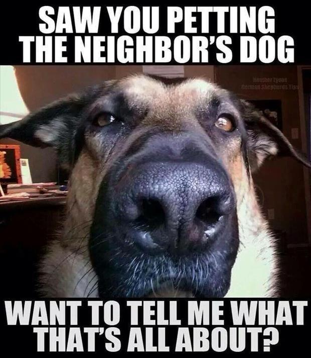 Saw you petting the neighbor's dog, want to tell me what that's all about? Picture Quote #1