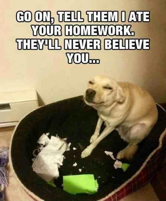 Go on, tell them I ate your homework. They'll never believe you Picture Quote #1