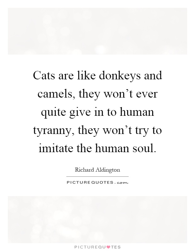 Cats are like donkeys and camels, they won't ever quite give in to human tyranny, they won't try to imitate the human soul Picture Quote #1