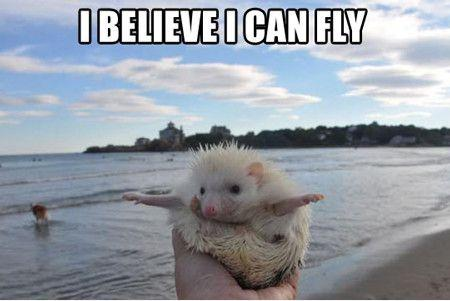 I believe I can fly Picture Quote #2