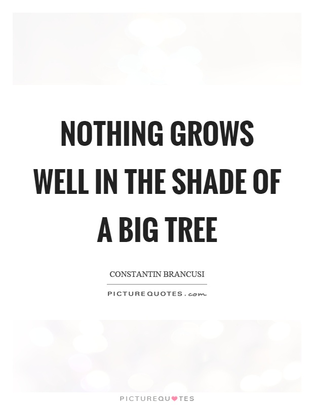 Nothing grows well in the shade of a big tree Picture Quote #1