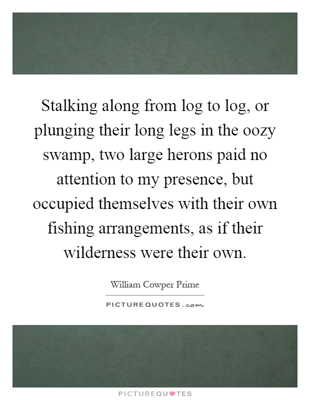 Stalking along from log to log, or plunging their long legs in the oozy swamp, two large herons paid no attention to my presence, but occupied themselves with their own fishing arrangements, as if their wilderness were their own Picture Quote #1