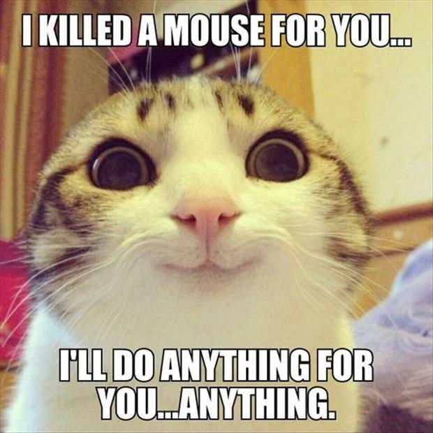 I killed a mouse for you... I'll do anything for you... anything Picture Quote #1
