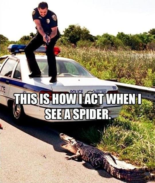 This is how I act when I see a spider Picture Quote #1