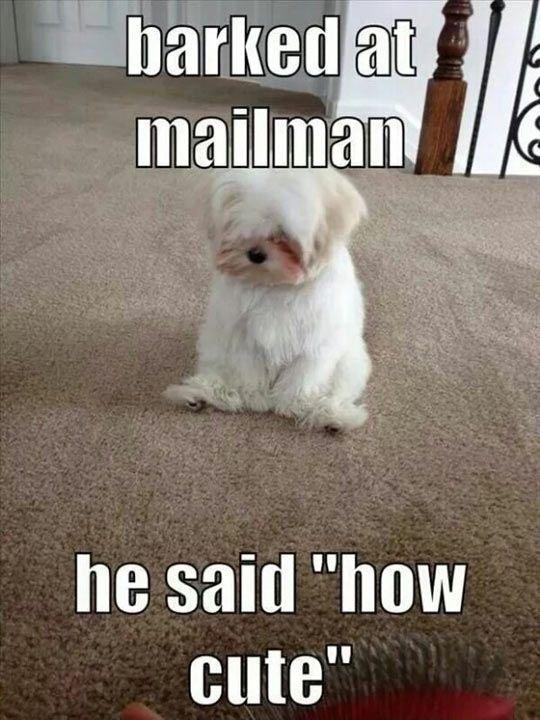 Barked at mailman - he said