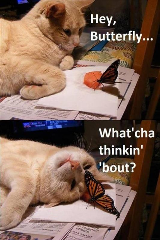 Hey butterfly, what'cha thinkin' 'bout? Picture Quote #1