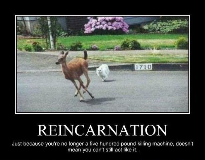 Reincarnation. Just because you're no longer a five hundred pound killing machine, doesn't mean you can't still act like it Picture Quote #1