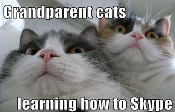 Grandparent cats, learning how to skype Picture Quote #1