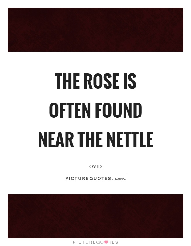 The rose is often found near the nettle Picture Quote #1