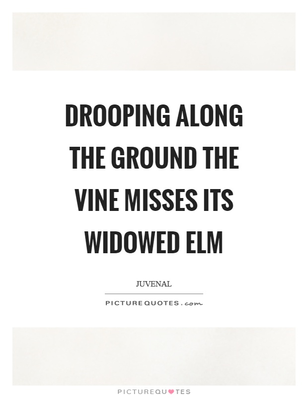 Drooping Along The Ground The Vine Misses Its Widowed Elm