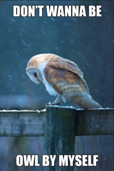 Don't wanna be owl by myself Picture Quote #1
