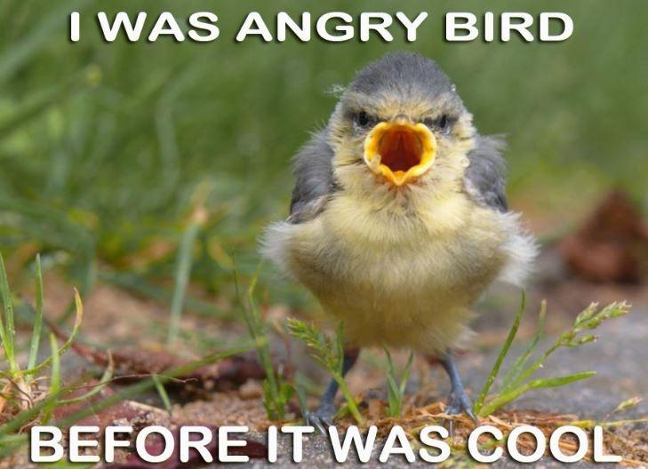 I was angry bird before it was cool Picture Quote #1