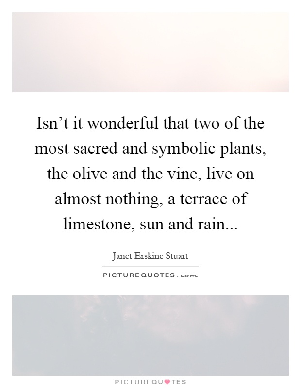 Isn't it wonderful that two of the most sacred and symbolic plants, the olive and the vine, live on almost nothing, a terrace of limestone, sun and rain Picture Quote #1
