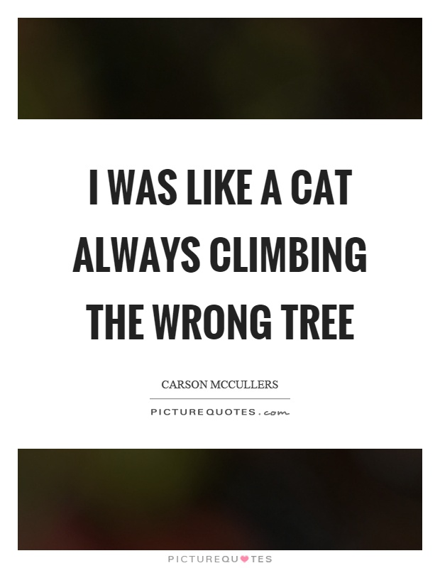I was like a cat always climbing the wrong tree Picture Quote #1