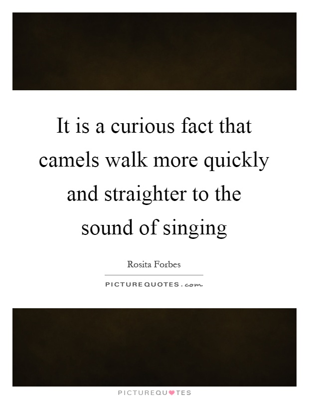 It is a curious fact that camels walk more quickly and straighter to the sound of singing Picture Quote #1