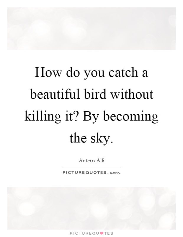 How do you catch a beautiful bird without killing it? By becoming the sky Picture Quote #1