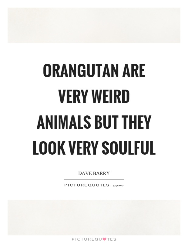 Orangutan are very weird animals but they look very soulful Picture Quote #1