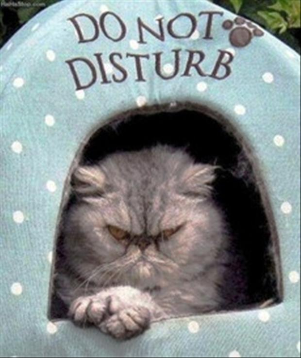 Do not disturb Picture Quote #1