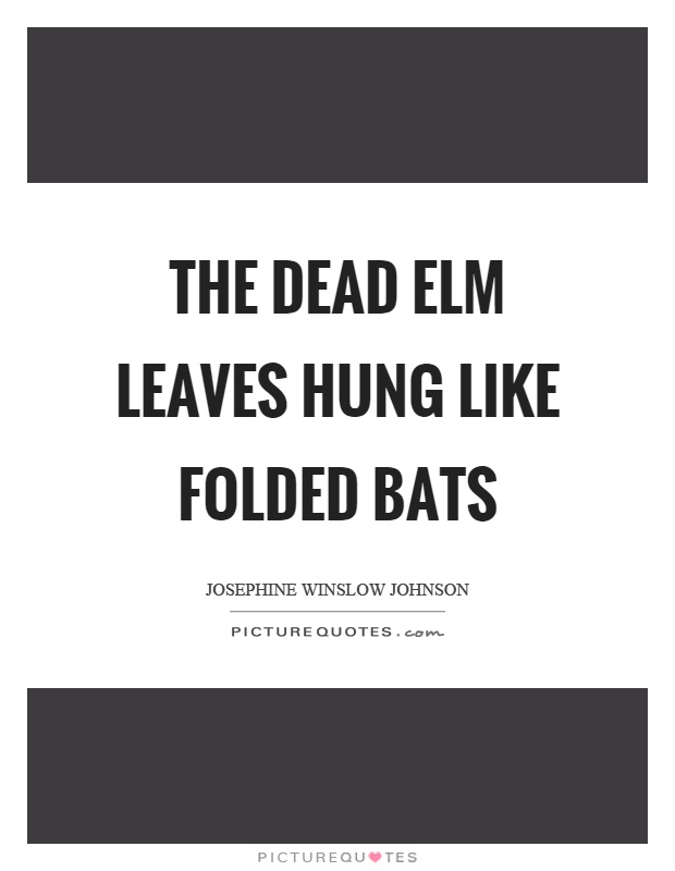 The dead elm leaves hung like folded bats Picture Quote #1