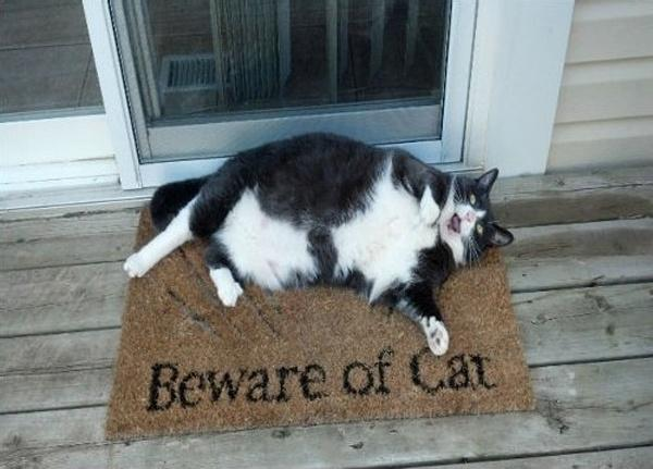 Beware of cat Picture Quote #1