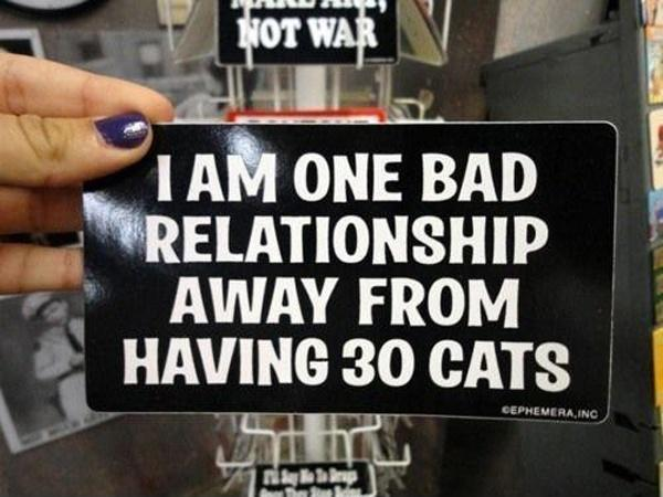 I am one bad relationship away from having 30 cats Picture Quote #1