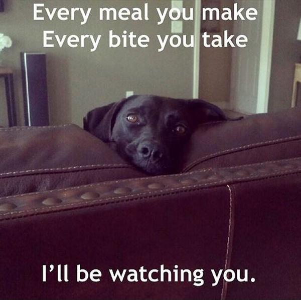 Every meal you make, every bite you take, I'll be watching you Picture Quote #1